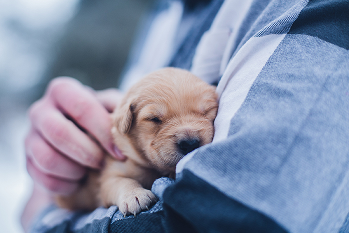 A close up portrait of a person holding a small brown puppy