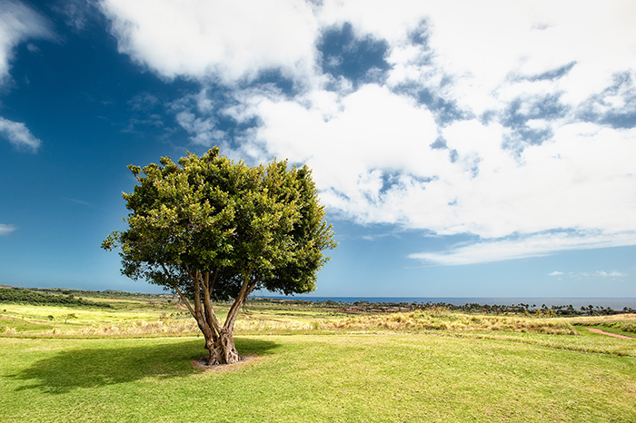 A bright and airy photo of a tree in a beautiful landscape - photo series ideas