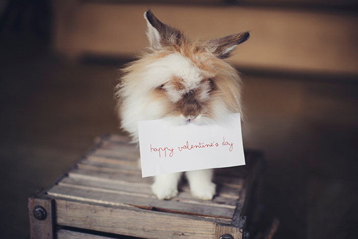 A fluffy bunny with a valentines card in his mouth - photoshoot ideas