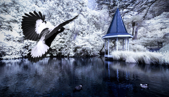 A large bird in flight over a lake - shutter priority mode