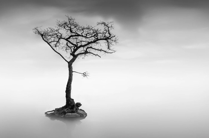 The tree - byPaul, fine art photo examples