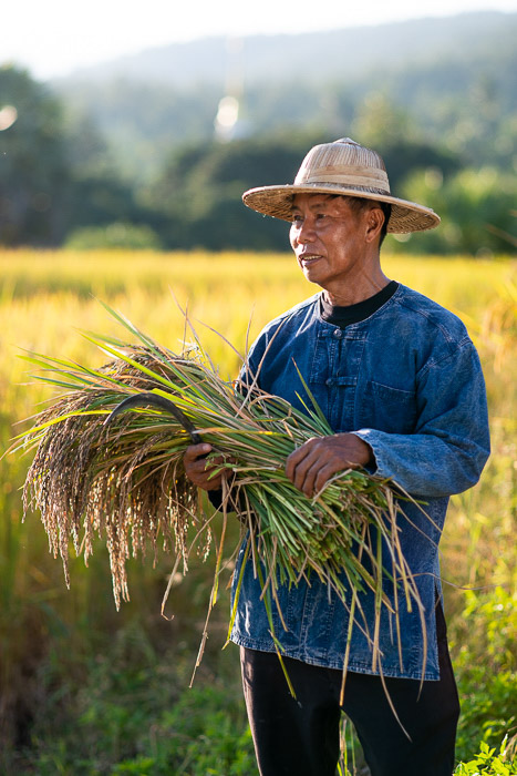 A portrait of a rice farmer at work shot using a reflector to bounce the light