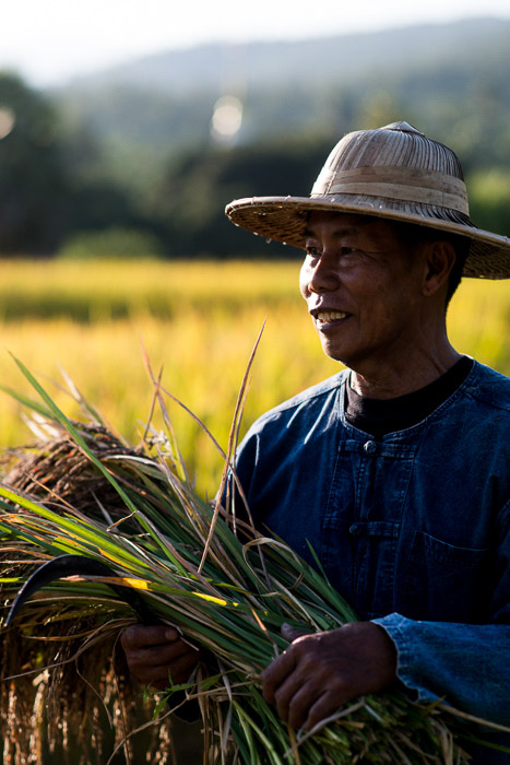 An overexposed portrait of a rice farmer at work - how to use backlight for portrait photography