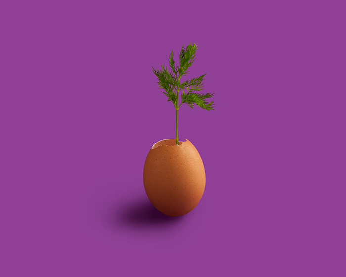 A conceptual photo of a plant growing from an eggshell on a purple background