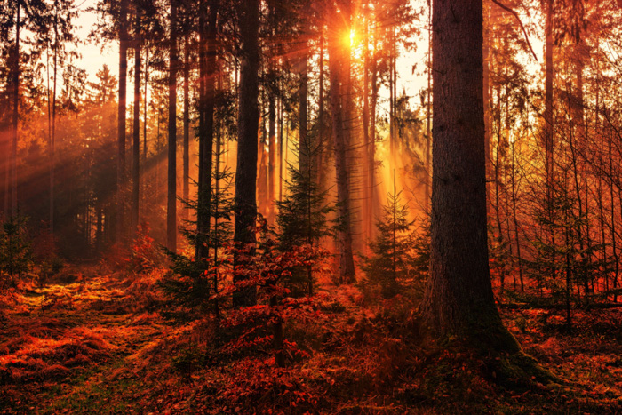A stunning forest scene enhanced by using the orton effect
