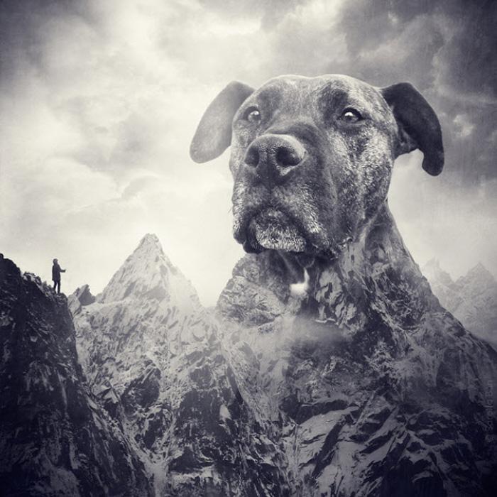Foto de manipulação surrealista de uma cabeça de cachorro como uma grande montanha por Sarolta Ban