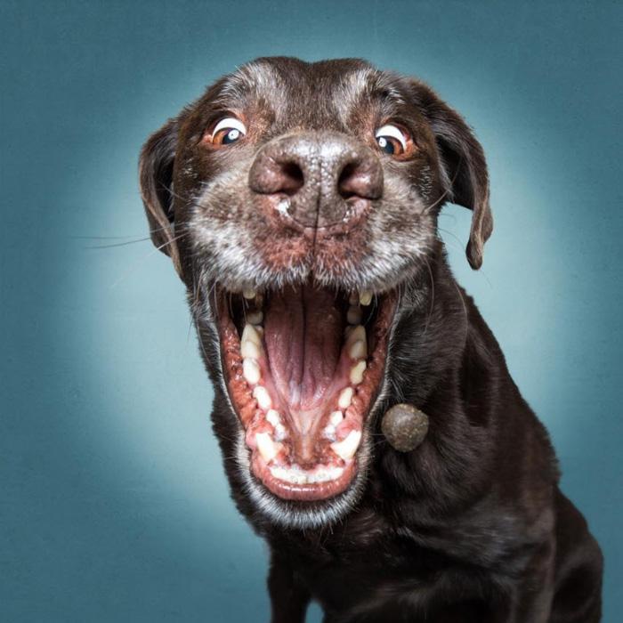 Um retrato humorístico de fotografia de cachorro de Christian Vieler Photography