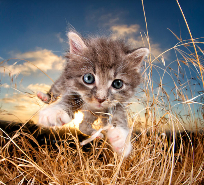 A cute kitten jumping towards the camera by Seth Casteel - pet photography inspiration