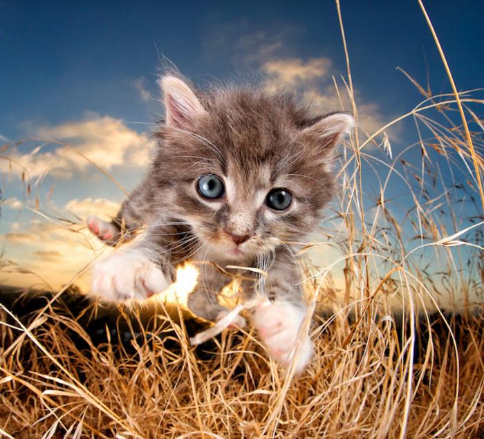 Um gatinho fofo pulando em direção à câmera de Seth Casteel