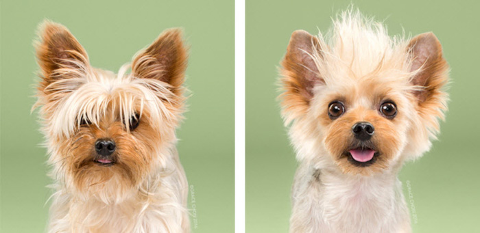 Cute diptych of a small dogs before and after make up by Grace Chon Photography. Best pet photography ideas