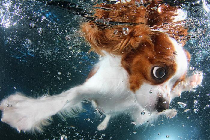 Retrato subaquático incrível de um lindo cão nadador por Seth Casteel