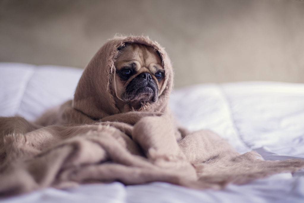 20 Adorable Pet Photography Ideas To Inspire You Cute Pets