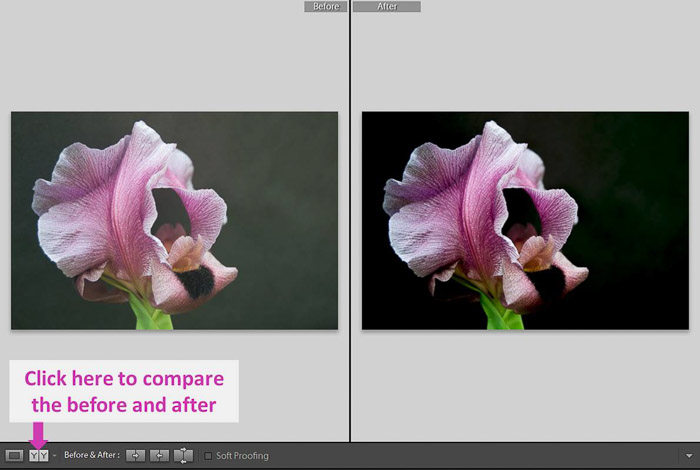 A screenshot showing how to use Lightroom's Shadows and Black Sliders for Better Control - before and after photo of a pink flower