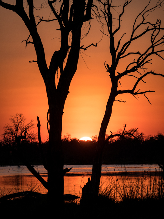 Sunset in the Okavango Delta, Botswana.