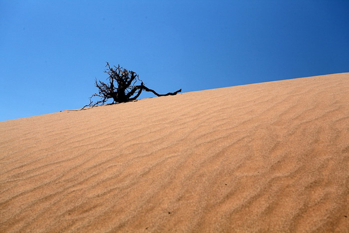 A minimalist landscape photography sot featuring a lone tree in a desert under a clear blue sky
