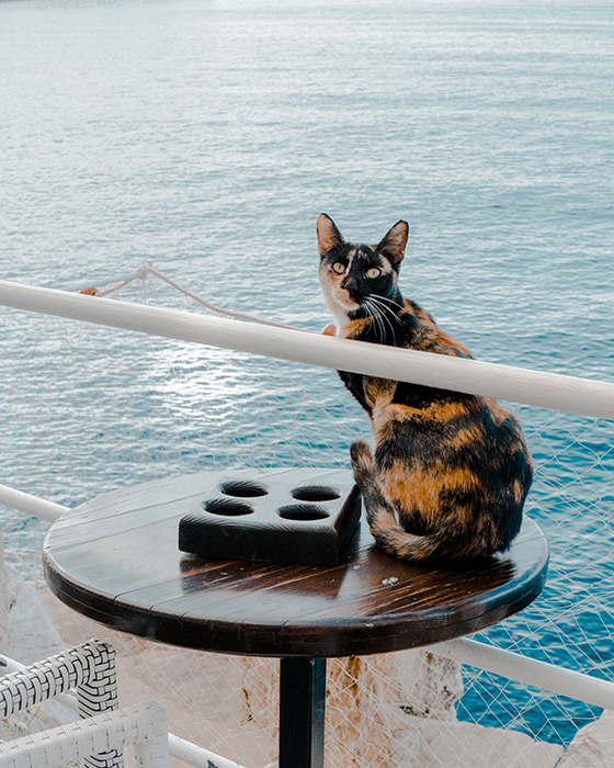 Humorous pet portrait of a cat sitting on a table on the deck of a boat - smartphone pet photography tips