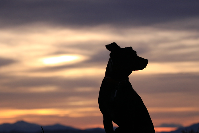 The silhouette of a dog against a glorious sunset - smartphone pet photography