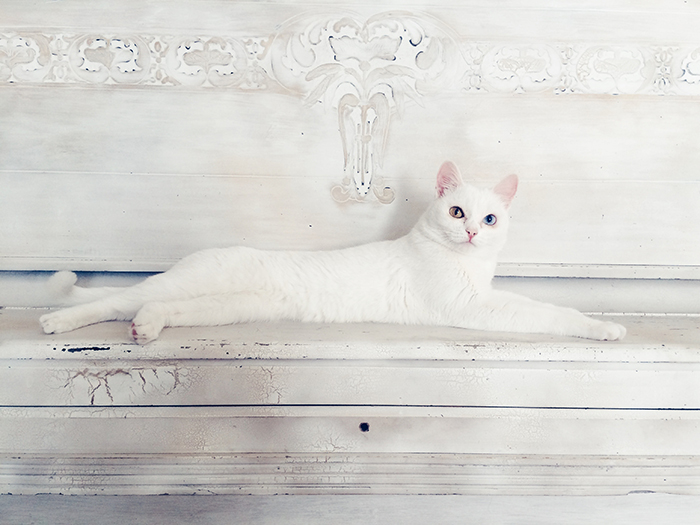 Stunning smartphone pet portrait of a white cat resting against a white background