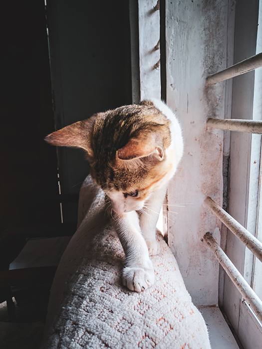 A sweet portrait of a tabby cat by a windowsill - smartphone pet photography