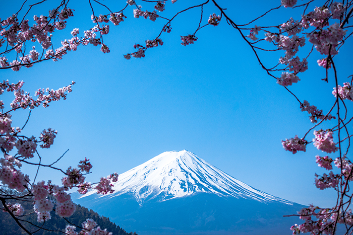Impressive view of Mount Fuji in Japan framed by cherry blossoms - beautiful pictures of japan