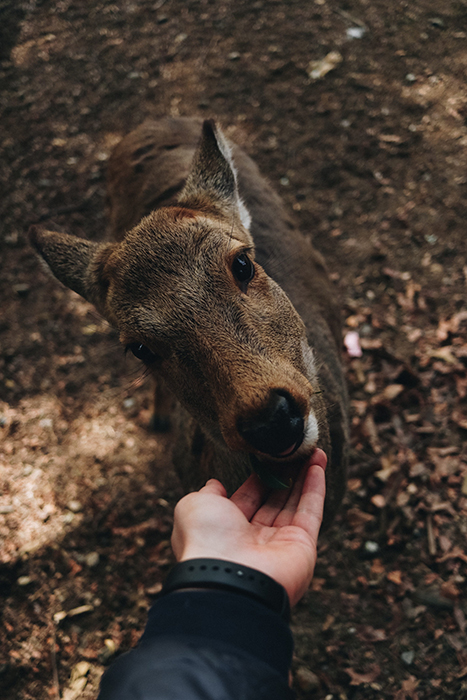 An adorable photo of a person petting a deer in Nara Park - Japan photography tips