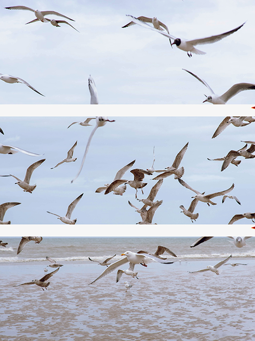 A triptych photography example featuring an image of seagulls flying cut into different parts