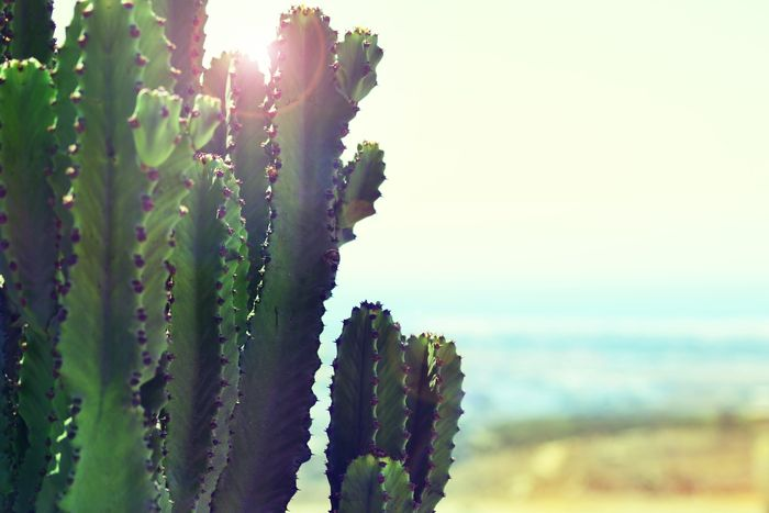 close-up photo of a cactus with lens flare