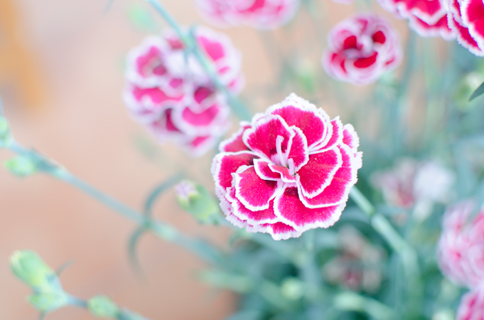 An overexposed pictured of a pink flower