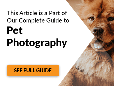 How To Take Cute Kitten Pictures Pet Photography Tips
