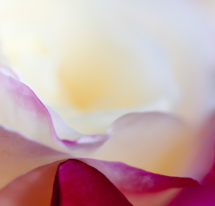 A close up photo of abstract flowers cropped in an abstract composition