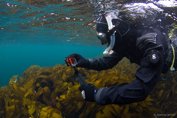 An underwater photographer capturing images of seaweed- adventure photography gear