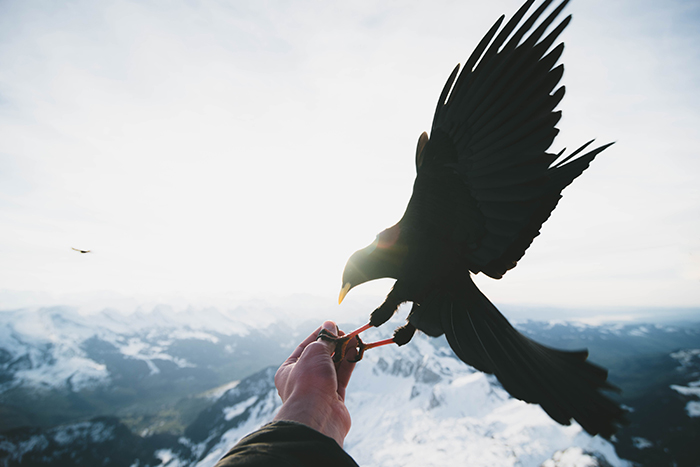 Atmospheric wildlife portrait of a bid of prey landing on someones hand - cool animal photography examples
