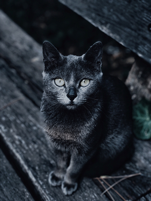 Overhead photo of a grey cat outdoors