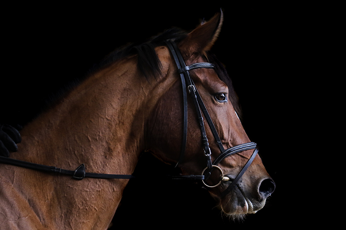 Professional Photos of Horses Using Natural Light and a Black Background