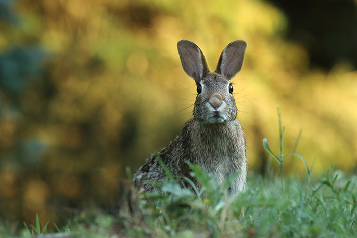 Sweet close up photo of a rabbit outdoors - cool animal photography examples
