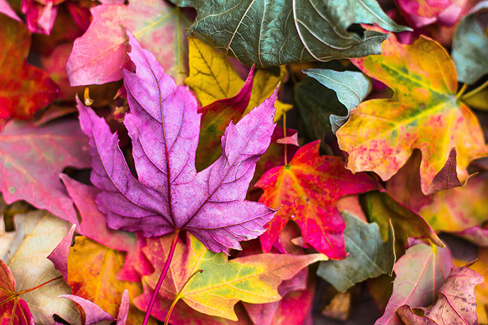 Beautiful autumn photography of colorful leaves on the ground