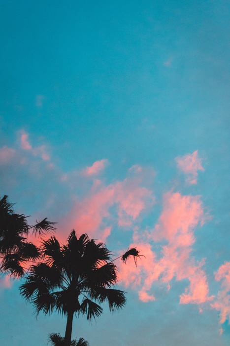 An image of two silhouettes of palm trees on a cyan and red background - complementary colors