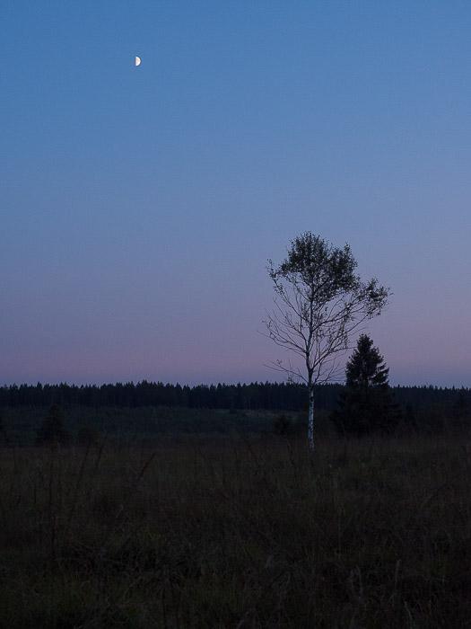 The Moon under a calm landscape shot at 24mm EFL.