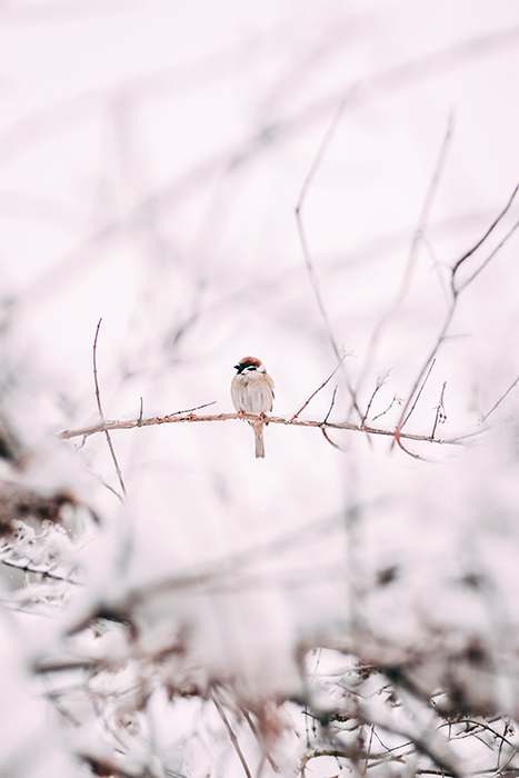 Beautiful winter photography shot of a bird resting on a snowy branch