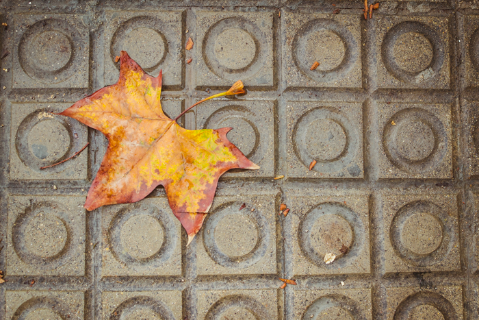 Overhead shot of an autumn leave on a stone path