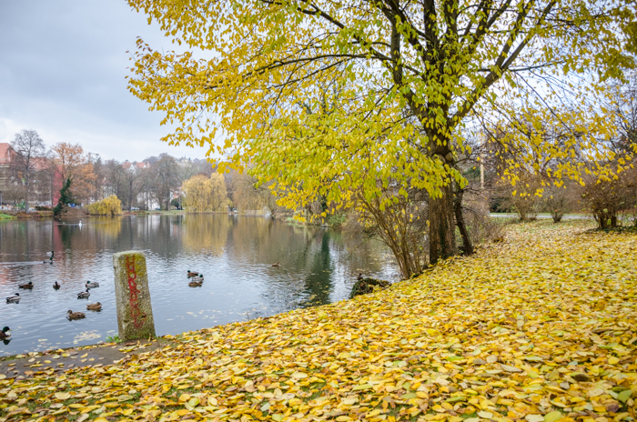 Autumn leaves covering the ground by a lake in a public park