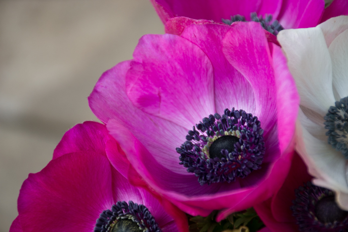 A close up of purple flowers in a garden