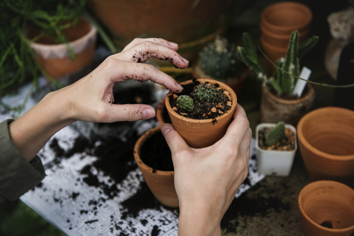 A persons hands putting soil in a small flower pot