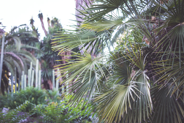 A middle shot of exotic trees and plants in a garden