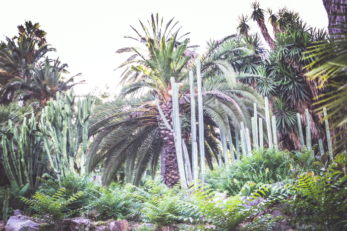 A wide angle shot of exotic trees and plants in a garden