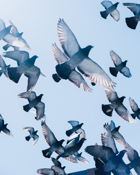 Stunning photo of a flock of birds in flight