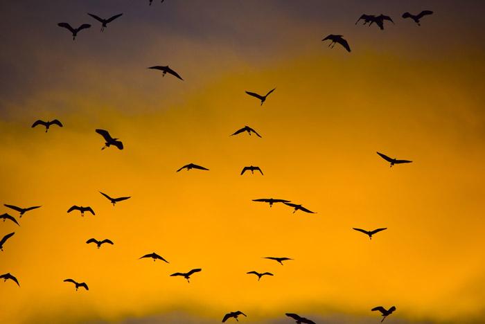 Flying birds in silhouette