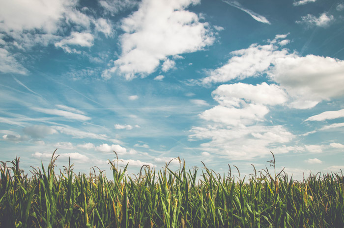 A harmonious landscape shot of grass under a cloudy sky - color theory for landscape photography