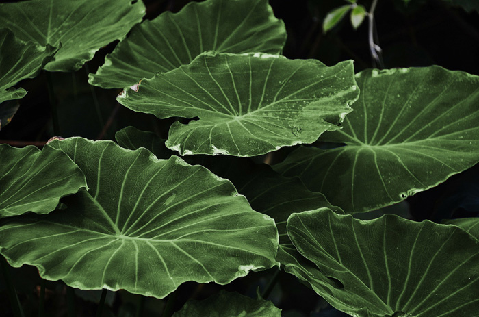 A close up photo of a group of green leaves - monotone color photo