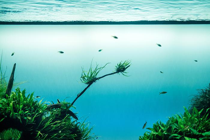 a stunning underwater landscape photo